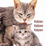 Bildband-Cover Katzenfotos